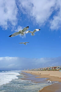 Seagulls-Flying-Over-The-Seash-2812995