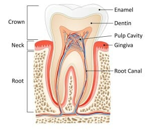 Manhattan Beach Root Canal